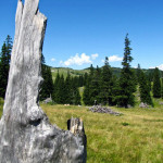 velika_planina3